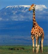 Volcan Kilimanjaro